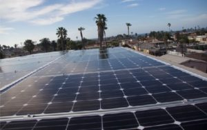 Solar panels in front of palm trees
