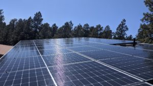 solar panels in front of pine trees